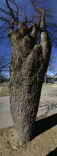 Tree Panoramic Shot
